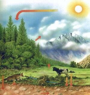 Ecology-01-goog