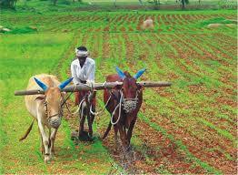 Agriculture-04-goog