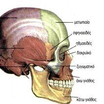 Skull-04-goog