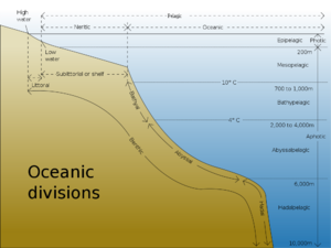 Oceanic-Divisions-goog