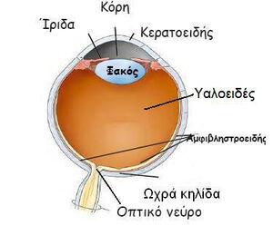 Eye-03-goog