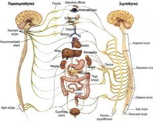 Biosystems-Nervous-01-goog