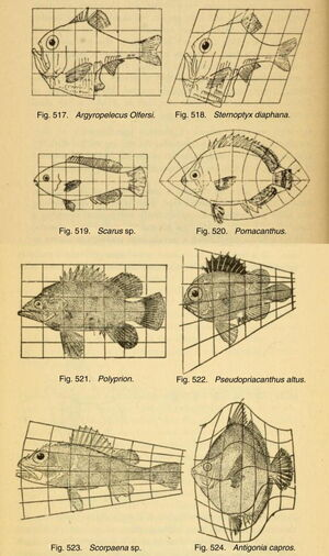 Bio-topology-05-goog