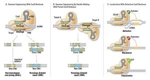 CRISPR-01-goog