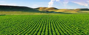 Agriculture-01-goog