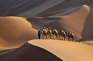 Desert-01-goog