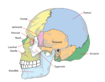 Skull-01-goog