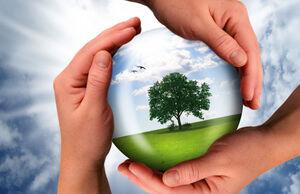 Sustainability-02-goog