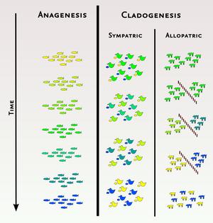 Anagenesis-03-goog