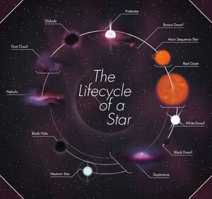 Star-Lifecycle-goog