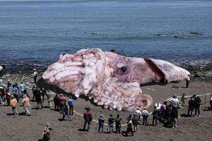 Fake-Squid-01-goog
