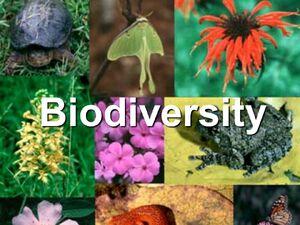 Biodiversity-01-goog