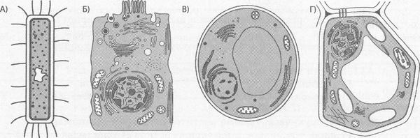 Строение клеток бактерий, животных, грибов и растений