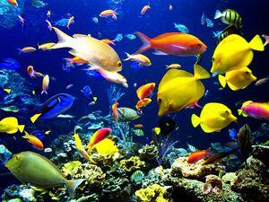 Sea-Harmony-goog