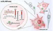 Virus-attack cell-01-goog