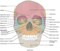 Skull-03-goog