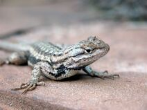 Reptiles-lisard-01-goog