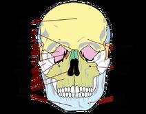 Skull-02-goog