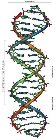 DNA Overview uk