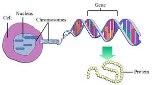 Genetics-Gen-02-goog