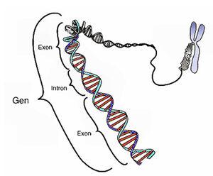 Genetics-Gen-01-goog