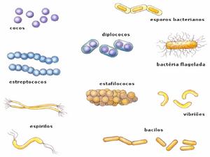 Bacteria-05-goog