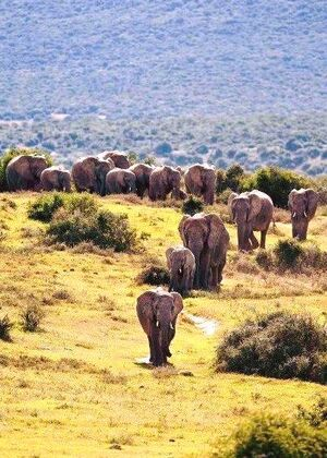 Animals-Elephants-01-goog