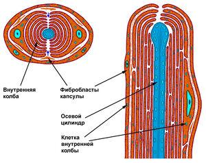 Plastinhatoe telze