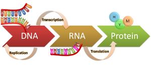 DNA-RNA-Protein-01-goog
