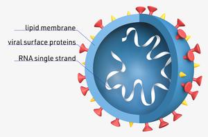 Virus-Corona-01-goog