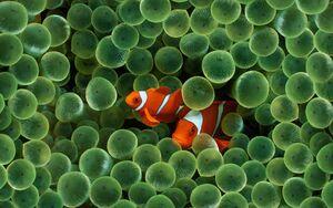 Symbiosis-clown-fish-goog