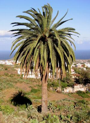Palm-tree-01-goog