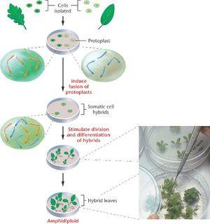 Cell-Hybridization-01-goog