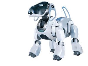 Robots-06-goog