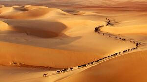 Desert-Camels-goog