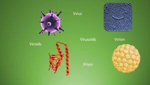 Virusoids-01-goog