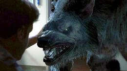 Battledogs Werewolf