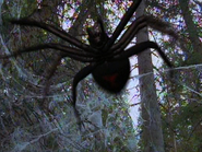Ice Spider 1