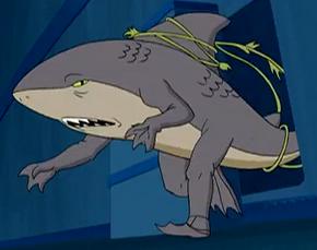 Shark mon