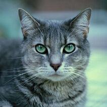 Stormy Cat