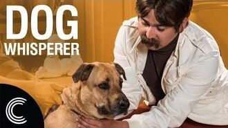 The Dog Whisperer with Farley Archer Rescue Dogs