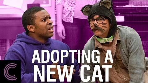 Adopting a New Cat