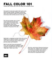 Fall Colors 101 REI