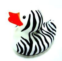Pato cebra