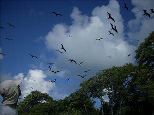 930birds