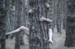 Symbiosis Historias-Visuales CCBYNCSA edited