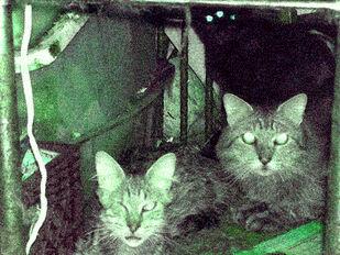 Basementcats
