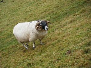 La oveja terrible electrica