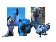 Blue Birds (Rio)