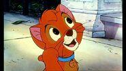 Oliver the Kitten